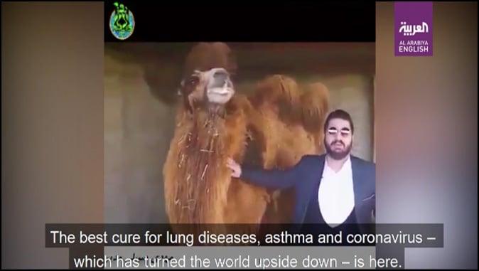 "Camel Urine: Islam's ""Best Cure"" For Coronavirus"